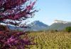 Le Grand Pic Saint Loup ©Christophe Naigeon