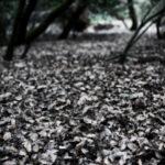 L_gioia_arbores-.jpg