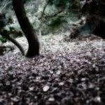 L_gioia_arbores-5.jpg
