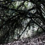 L_gioia_arbores-6.jpg