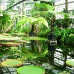 _marioorto-botanico_1_.jpg