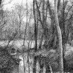Riflessi nel sottobosco - incisione di Livio Ceschin