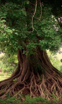 cinziaecd066309ae9b1e485357c0d37073bc9--tree-roots-tree-of-life.jpg