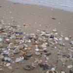 conchiglie_seashells_01.jpg