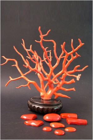 corallo_2n.jpg