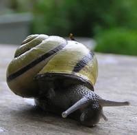 escargot1-851c4.jpg