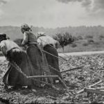 Contadine al lavoro nei campi durante la Grande Guerra