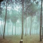 guido_guidi_viale_italia_tagliata_di_cervia_1984inbeweecities-620x420.jpg