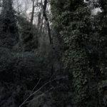 le_jardin__01.jpg
