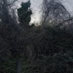 le_jardin__03.jpg