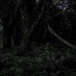 le_jardin__06.jpg