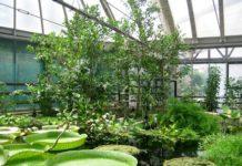 Il mangrovieto