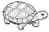 tartaruga-desenhos-para-colorir-9.jpg