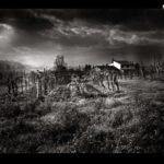 toscane-champ_de_vigne.jpg
