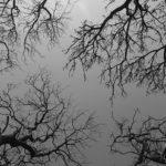 trees-1406760_640-2.jpg